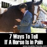 7 Ways To Tell If A Horse Is in Pain