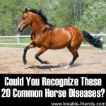 Could You Recognize These 20 Common Horse Diseases?