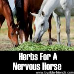 Herbs For Nervous Horses