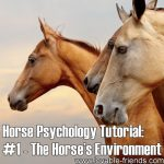 Horse Psychology Tutorial: Part 1 The Horse's Environment