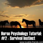 Horse Psychology Tutorial: Part 2 Survival Instinct