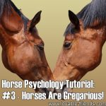 Horse Psychology Tutorial: Part 3 Horses Are Gregarious