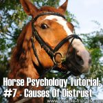 Horse Psychology Tutorial: Part 7 Common Causes Of Distrust