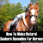 How To Make Natural Sunburn Remedies For Horses