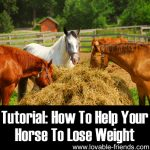 How To Help Your Horse Lose Weight