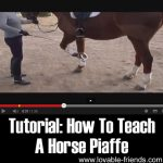 Tutorial: How To Teach A Horse Piaffe